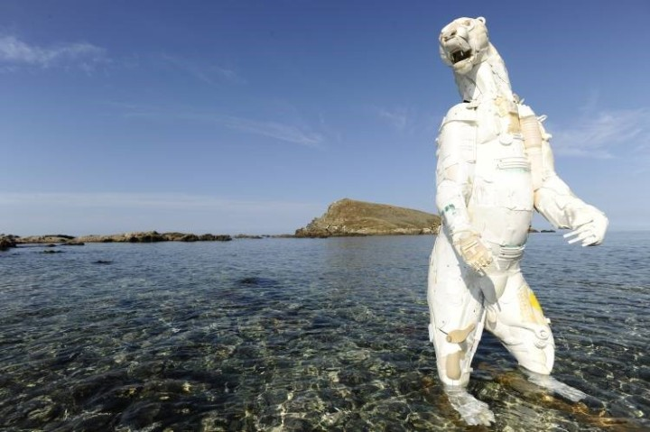 Gilles Cenazandi Polar Bear Lost in Cap Corsica